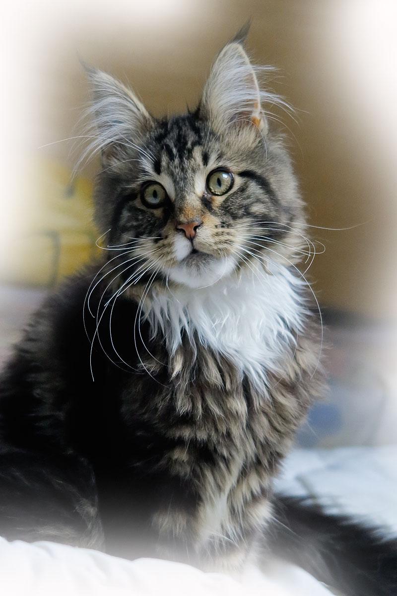 Roméo 4 mois et demi